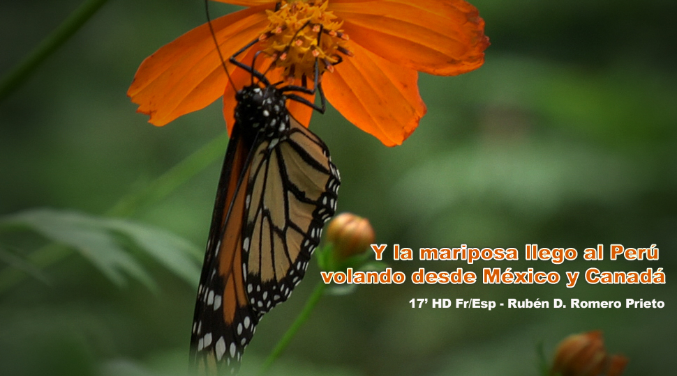 Y La Mariposa LLegó Al Perú
